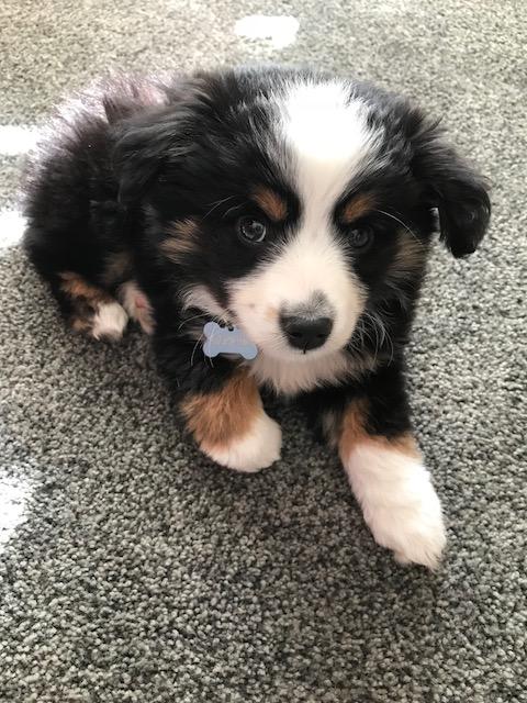Merlin 2 months.