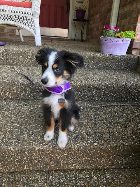 Merlin 5 months